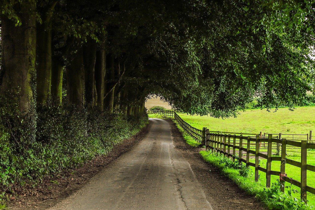 path, farm, nature-2741259.jpg